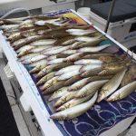 best fishing charters mornington peninsula