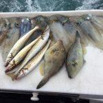 best fishing charters port phillip bay