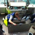 tuna fishing portland